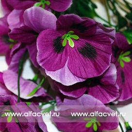 анютины глазки цвета фиолетовый 7