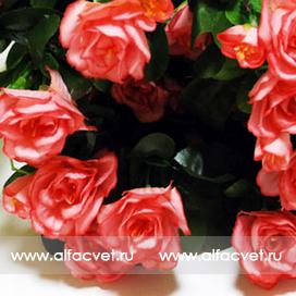 азалия цвета темно-розовый с розовым 45