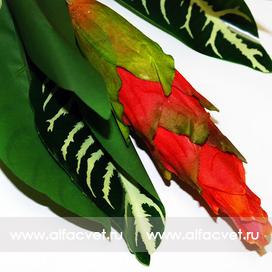 экзотический цветок цвета красный 4