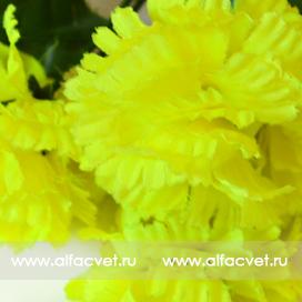 фиалка-гвоздика цвета салатовый 39