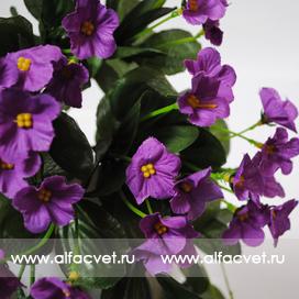 фиалка (куст) цвета фиолетовый 7