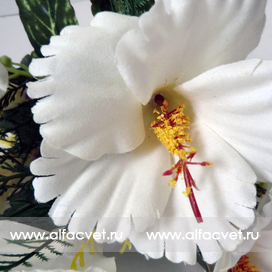 гибискус (китайская роза) цвета белый 6