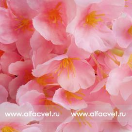 глициния цвета светло-розовый 9