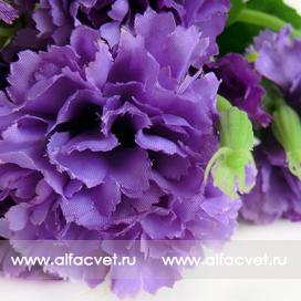 букет гвоздик цвета фиолетовый 7