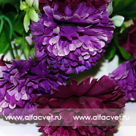 гвоздики цвета фиолетовый и темно-фиолетовый 27