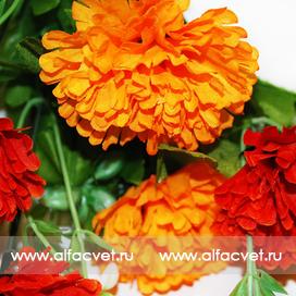 гвоздики цвета оранжевый с красным 65