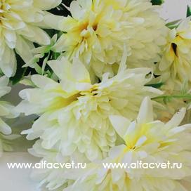 хризантемы цвета белый с желтым 13