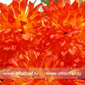 букет хризантем цвета оранжевый 2