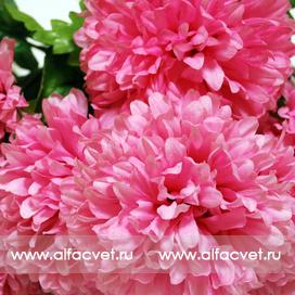 букет хризантем цвета розовый 5
