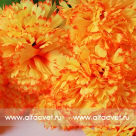 хризантемы цвета оранжевый 2