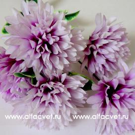 букет хризантем шарики цвета фиолетовый с белым 15