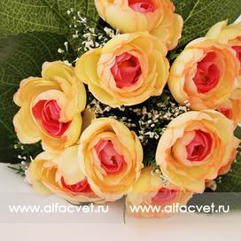 камелия цвета желтый с розовым 18