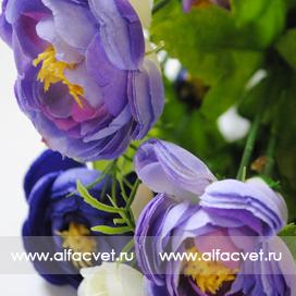 камелия цвета синий, голубой, белый 48