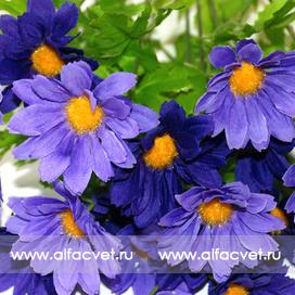 касмея цвета фиолетовый 7