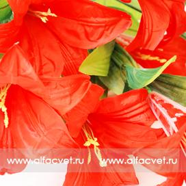 лилии цвета красный 4