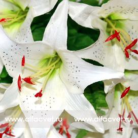 лилии цвета белый 6