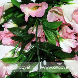 лилия висячая цвета розовый с белым 14