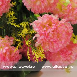 маргаритки цвета розовый 5