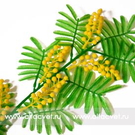 мимоза цвета зеленый с желтым 30