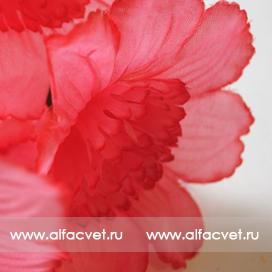 нарциссы цвета розовый 5