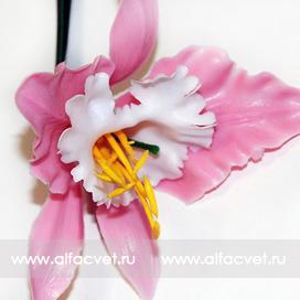 орхидеи цвета розовый с белым 14