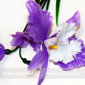 орхидеи цвета фиолетовый с белым 15