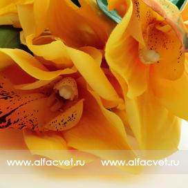 орхидеи цвета желтый 1
