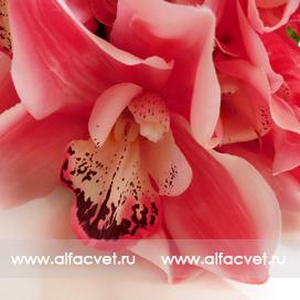 орхидеи цвета розовый 5