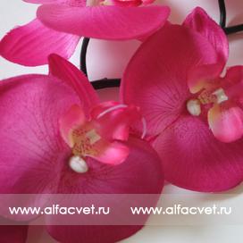 орхидеи цвета малиновый 11