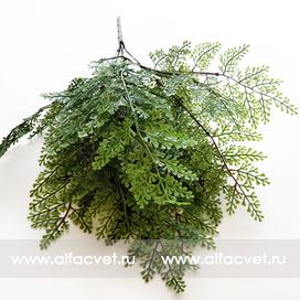 папоротник c мелкими листьями цвета зеленый 59