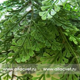 папоротник c крупными листьями цвета темно-зеленый 29