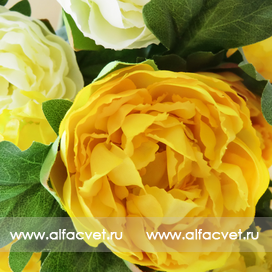 букет пионов цвета белый с желтым 13