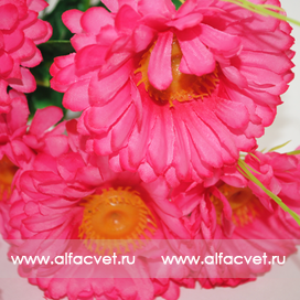 ромашки цвета розовый 5