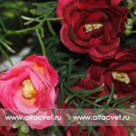 розы цвета красный с розовым 42