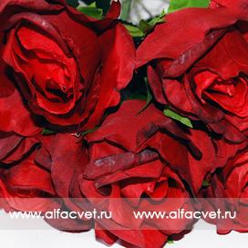 букет роз цвета бордовый 61