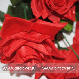 розы цвета красный 4