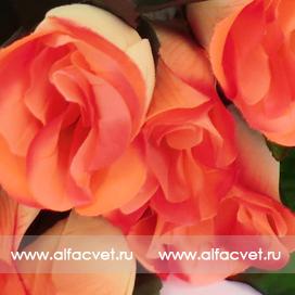 букет роз с крупными листьями цвета розовый 5