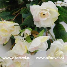 маленькие розы цвета белый с желтым 13