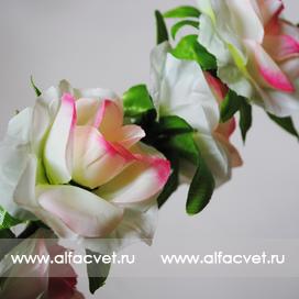 ветки роз цвета белый с розовым 19