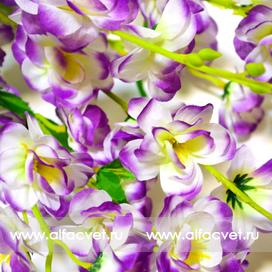 сакура цвета фиолетовый с белым 15