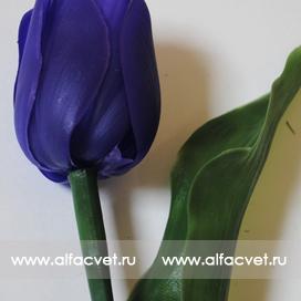 тюльпан цвета фиолетовый 7