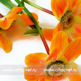 ветка ромашек с осокой цвета оранжевый 2