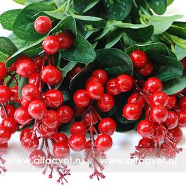 ягоды цвета красный 4